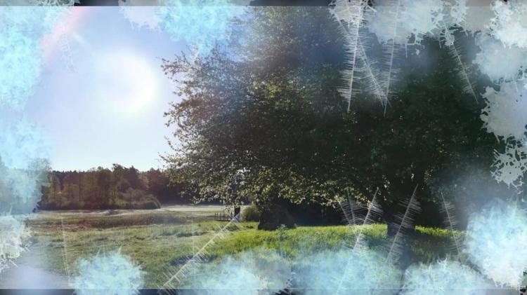 Sumpfbrückenweg Baldenau Thumbnail frost_Moment 2